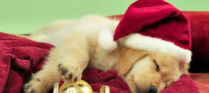 Fem tips för att frigöra tid och energi till jul